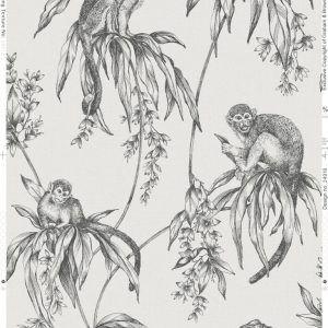 106157 Saimiri Monkey